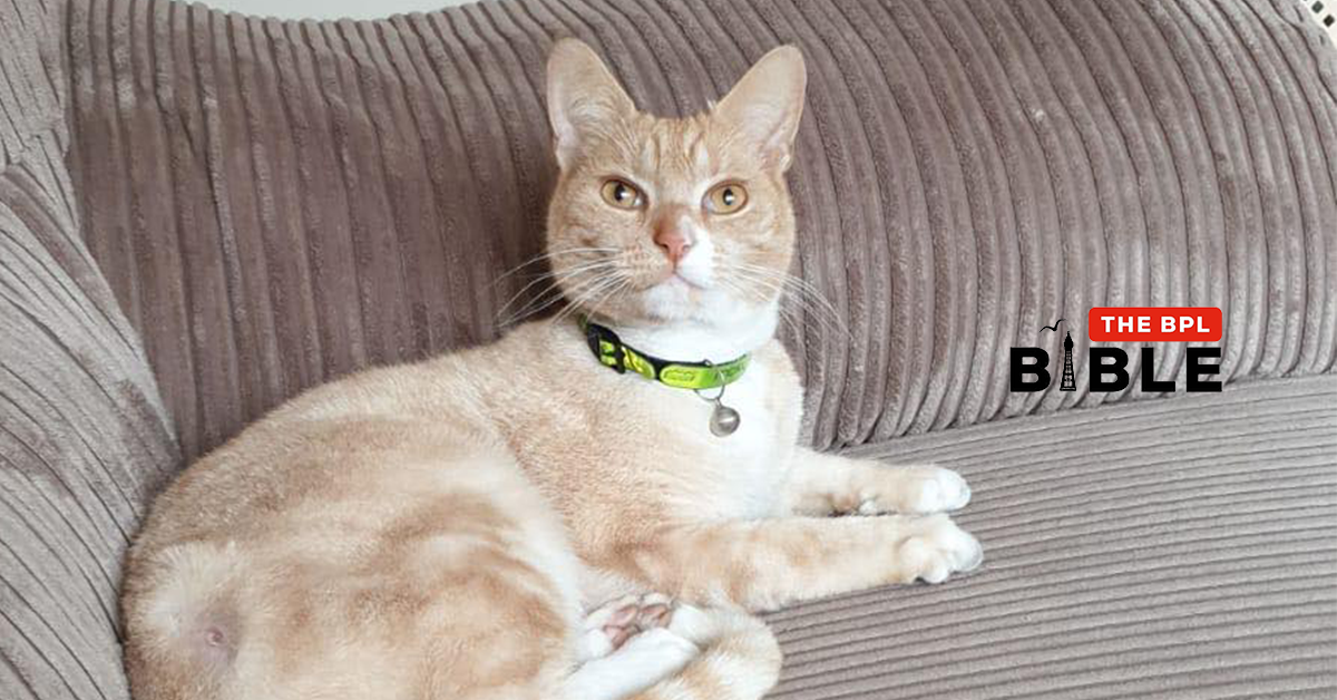 Cat shot with suspected air weapon – Squires Gate area
